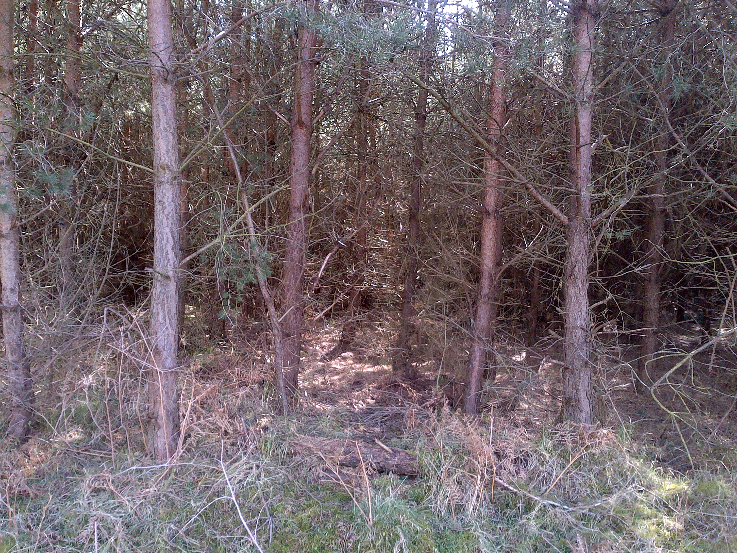 Downham Warren - Section 14
