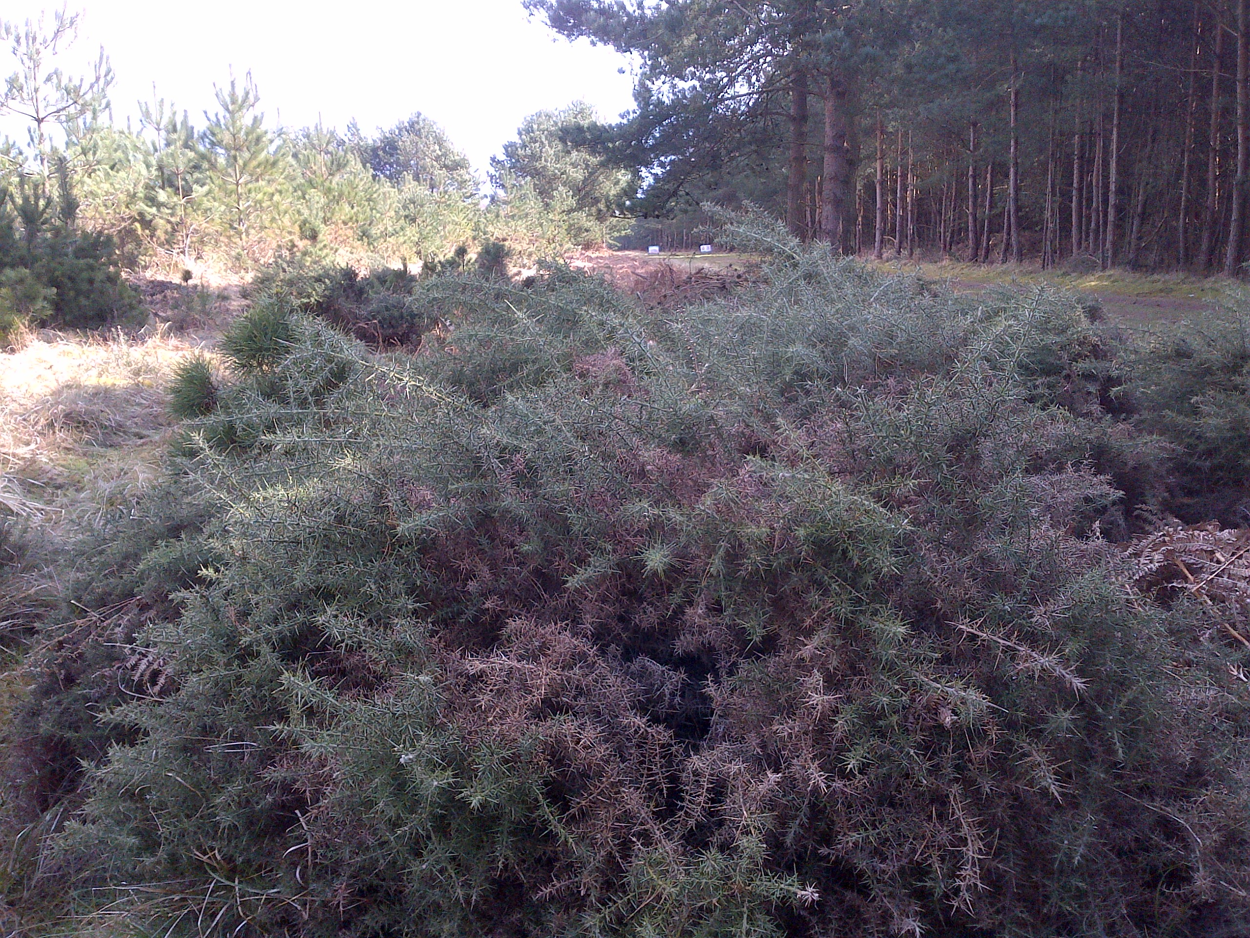 Downham Warren - Section 16