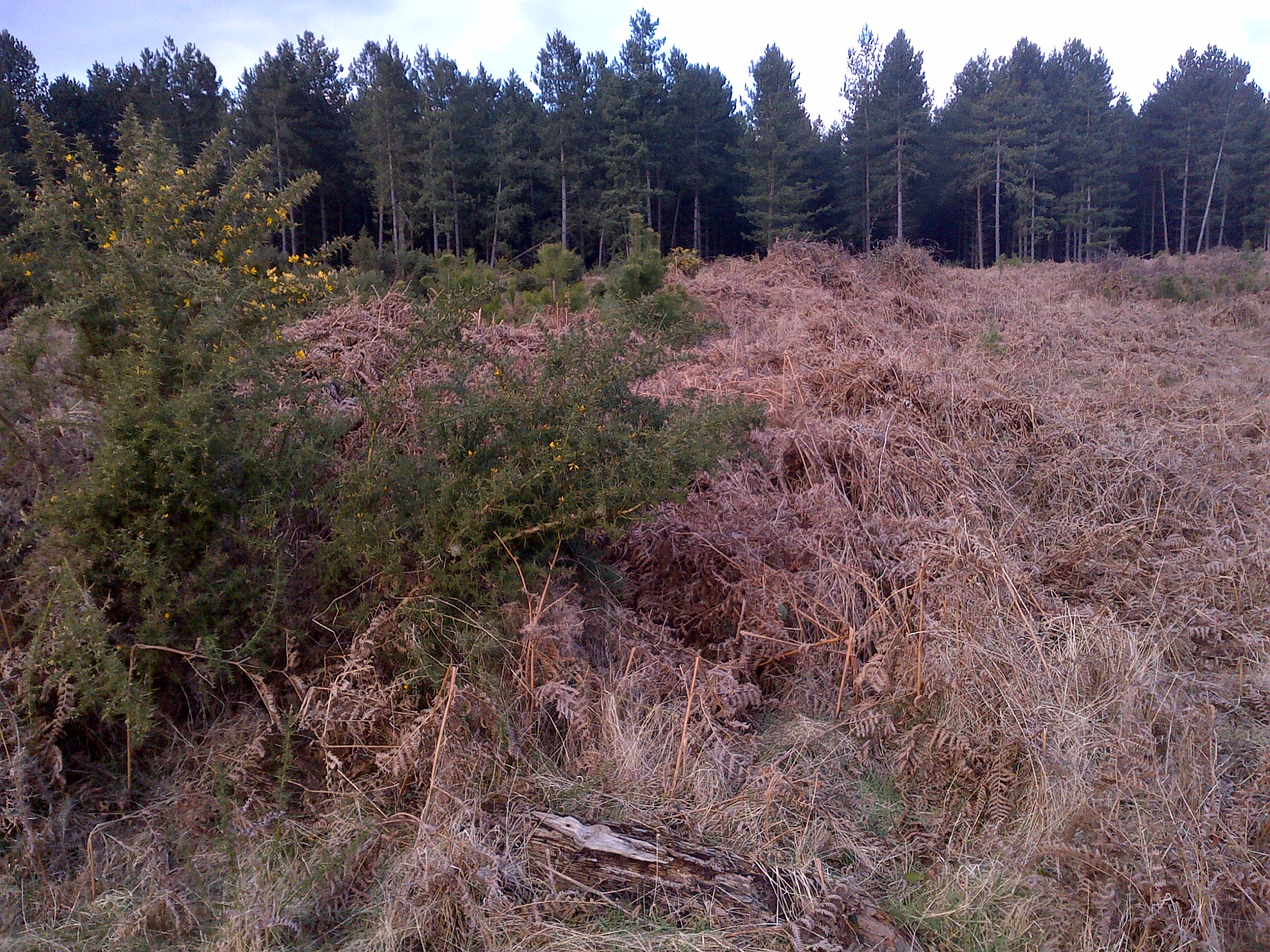 Downham Warren - Section 22