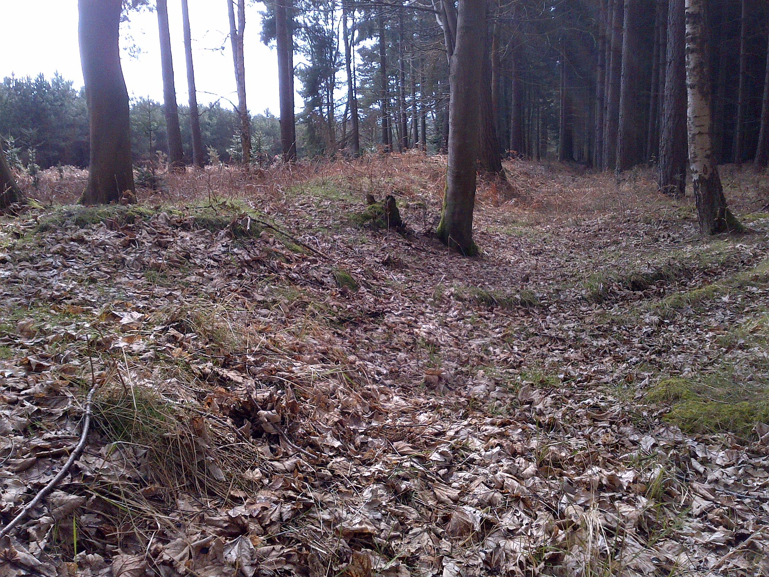 Downham Warren - Section 11