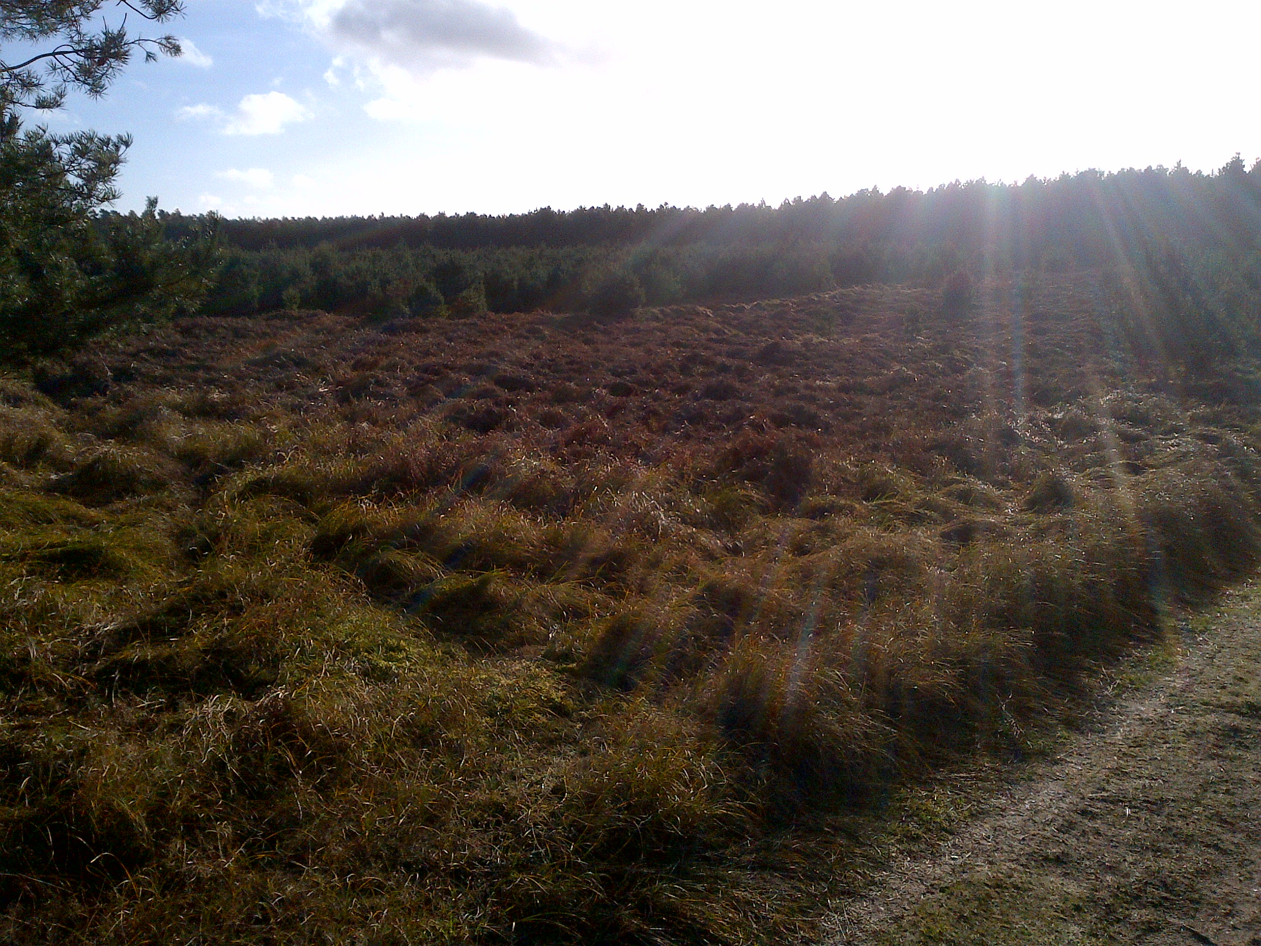 Downham Warren - Section 2