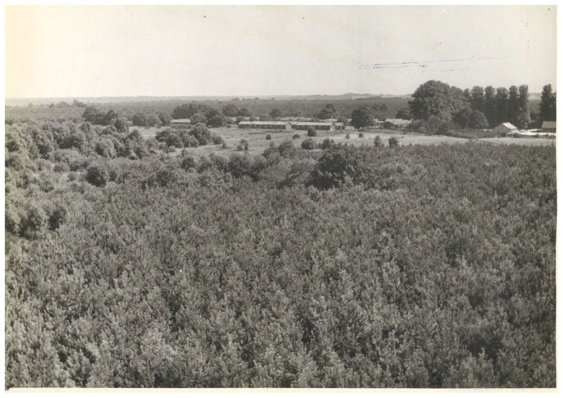 High Lodge 1947. taken from the Fire Tower